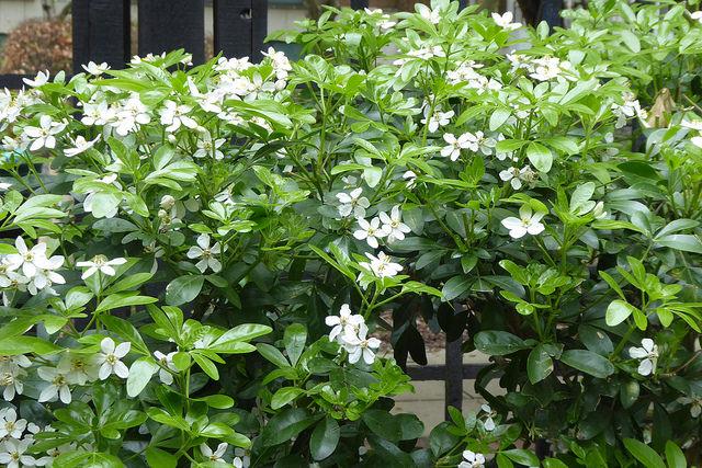 crabtree-flowers