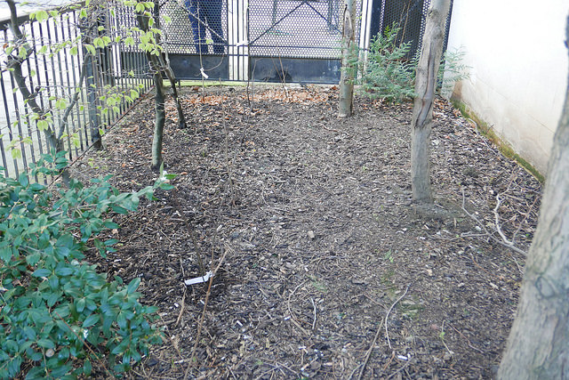 Planted area.