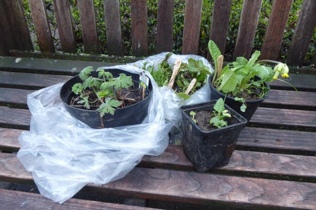 Potted plants on a bench.