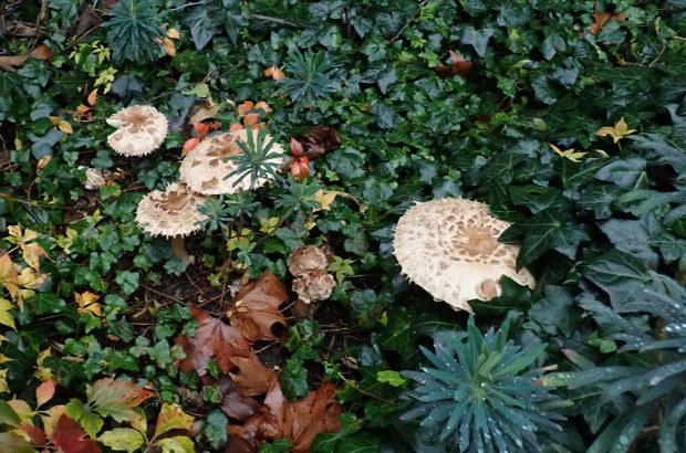 Fungi growing.