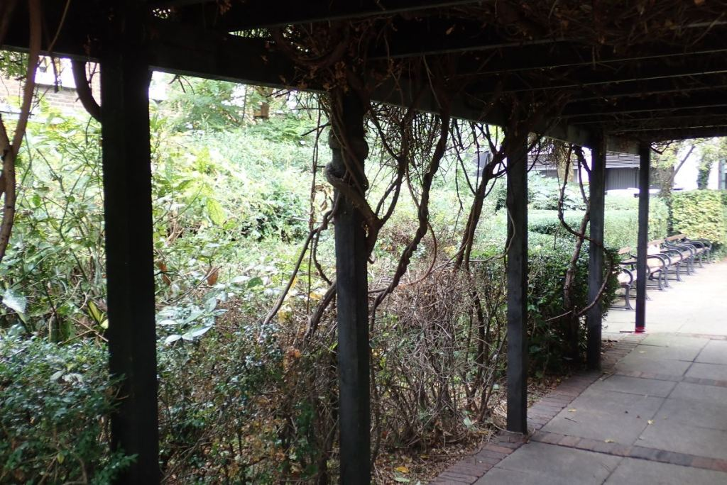 View of pergola with climbers cut back.